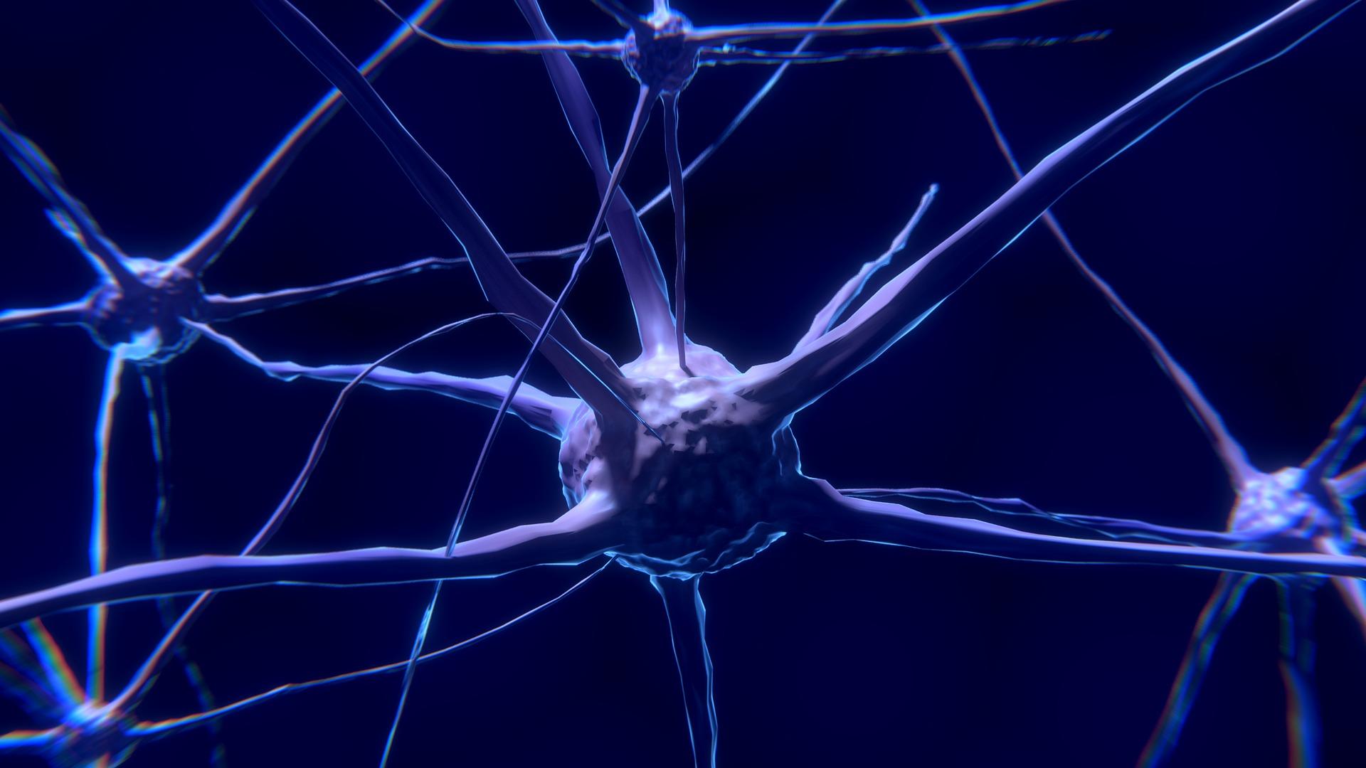 stem-cells-discover-pathways